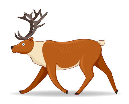 North deer animal standing on a white background. Cartoon style vector illustration