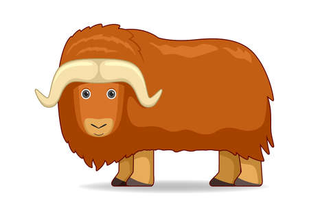 Musk ox animal standing on a white background. Cartoon style vector illustration Illustration