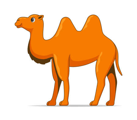Asian camel animal standing on a white background. Cartoon style vector illustration Illustration