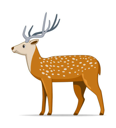 Axis deer animal standing on a white background. Cartoon style vector illustration