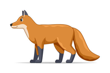 Fox standing on a white background. Cartoon style vector illustration Illustration