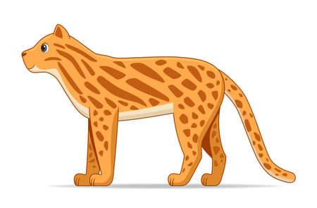 Ocelot standing on a white background. Cartoon style vector illustration