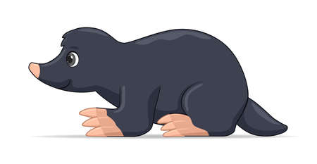 Mole standing on a white background. Cartoon style vector illustration Illustration
