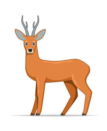 Roe deer standing on a white background. Cartoon style vector illustration