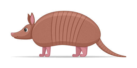 Armadillo animal standing on a white background. Cartoon style vector illustration