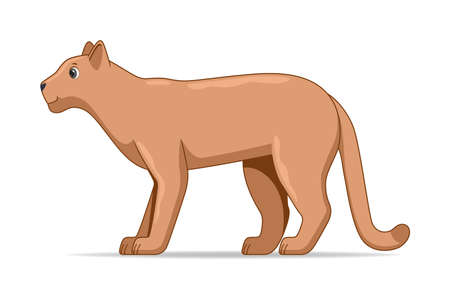 Puma standing on a white background. Cartoon style vector illustration