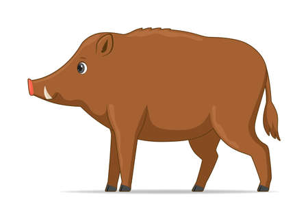 Wild boar standing on a white background. Cartoon style vector illustration