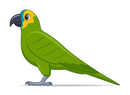 Amazon parrot bird on a white background. Cartoon style vector illustration