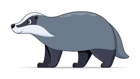 Badger animal standing on a white background. Cartoon style vector illustration