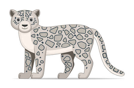 Snow leopard standing on a white background. Cartoon style vector illustration