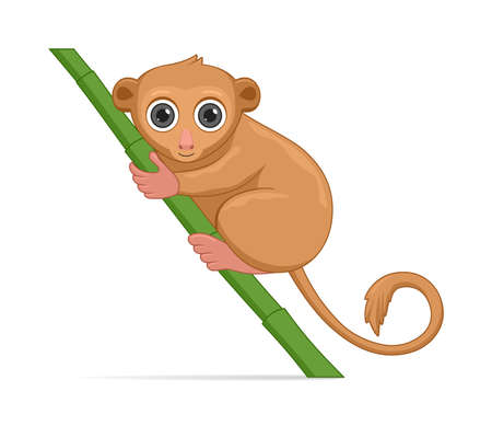 Tarsier standing on a white background. Cartoon style vector illustration