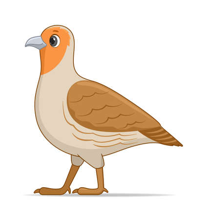 Grey partridge bird on a white background. Cartoon style vector illustration