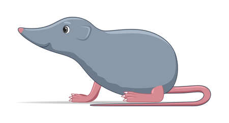 Shrew standing on a white background. Cartoon style vector illustration