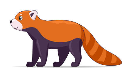 Red panda standing on a white background. Cartoon style vector illustration Stock Illustratie