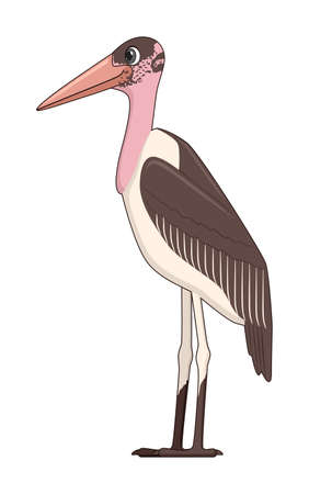 Marabou stork bird on a white background. Cartoon style vector illustration