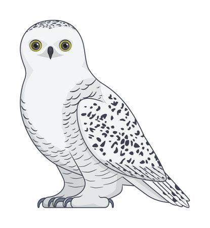 Snowy owl bird on a white background. Cartoon style vector illustration Stock Illustratie
