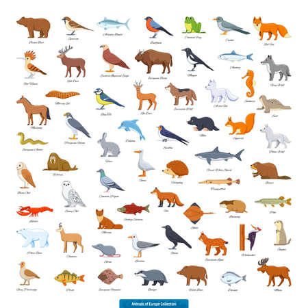 Animals of Europe Collection. Cartoon style vector illustration