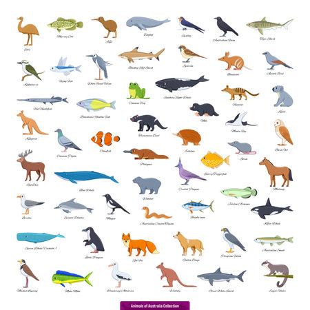 Animals of Australia Collection. Cartoon style vector illustration
