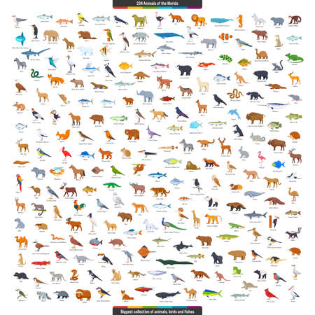 Animals of the World Big Collection. Animals, birds and fishes living on all continents. Cartoon style vector illustration 矢量图像