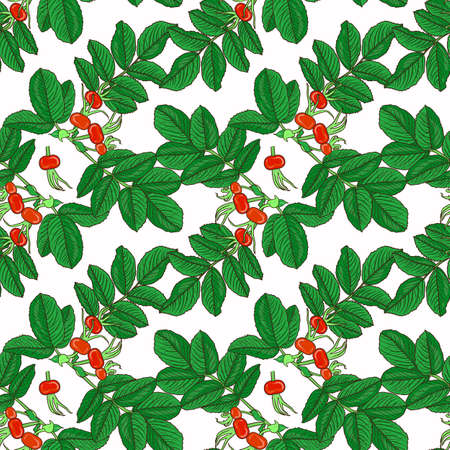 A Vector seamless pattern branch of dog rose hips on white background. Illustration