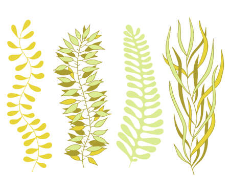 Set of plant elements isolated on a white background. Leaves, branches. Seaweed. Scandinavian style. Ilustrace