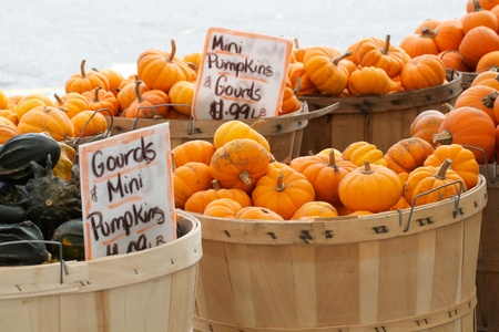 Abundance of colorful squash and gourds having bold patterns and a variety of shapes are displayed at an outdoor farmers market  Horizontal composition