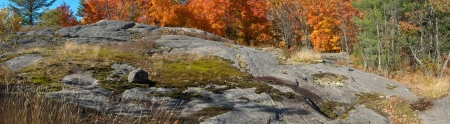 acer: Expanse of rugged exposed rocks of the Canadian Shield with background of brilliant orange maple leaves  Autumn landscape horizontal panorama