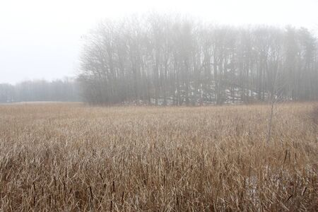 Fog creates delicate desaturated colors in a wide angle view of a large marsh  Horizontal format with dried wetland grasses in the foreground and a silvery gray forest in the background  photo