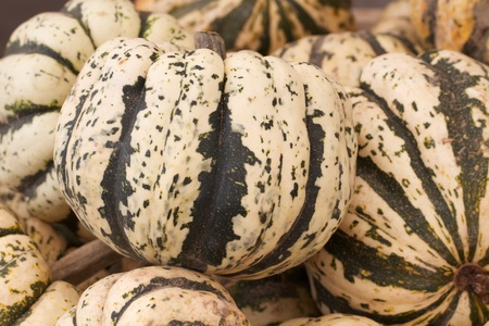 Abundance of colorful squash and gourds having bold patterns and a variety of shapes are displayed at an outdoor farmers market  Horizontal composition     photo