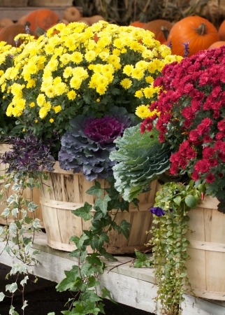 Colorful display of autumn flowers at an outdoor farmers market photo