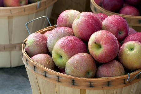 Bushel baskets full of perfect luscious freshly picked apples Stock Photo