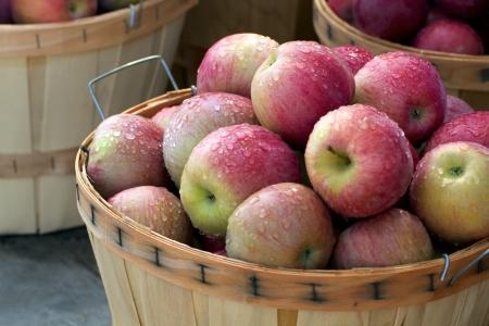 manzana agua: Bushel llenos de manzanas deliciosas perfectos reci�n elegido cestas