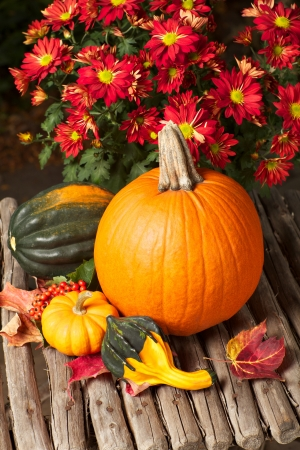 Beautiful still life of autumn squash varieties and red chrysanthemums on a rustic willow stick table  Vertical format   Stock Photo