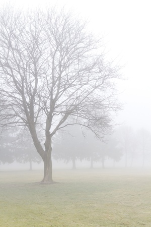 fading: Misty spring meadow with leafless maple tree fading into the fog. Desaturated, vertical with copy space. Stock Photo