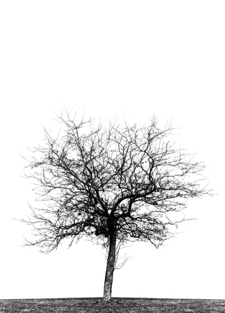 High contrast black and white silhouette of single leafless crabapple tree in a field.