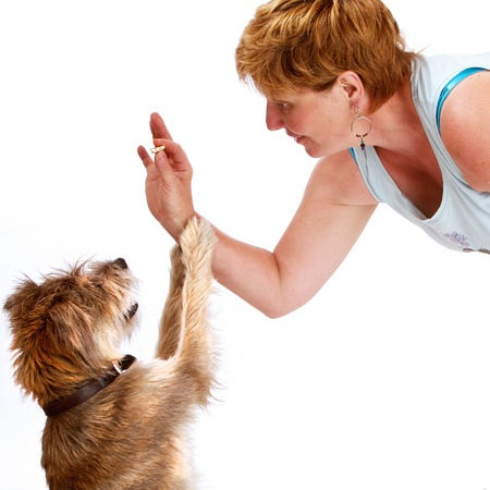 Happy smiling woman bends down to give a treat to her small shaggy dog  Her hair color and texture is similar to the dog