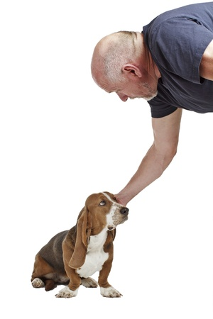 Blue basset hound puppy sits and looks up at man, who reaches down to pat its head  Isolated on white background, vertical with copy space