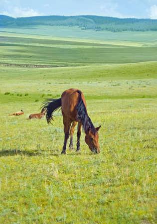 grazed: The horse is grazed in the field