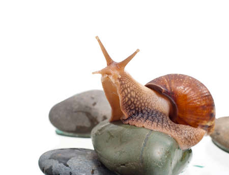 Most land snails on the rock photo