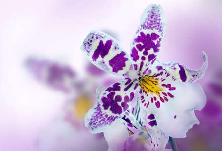 flores exoticas: Orquídeas en el fondo difuso de color lila