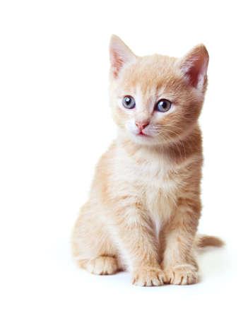 kitten sitting on white background Stock Photo