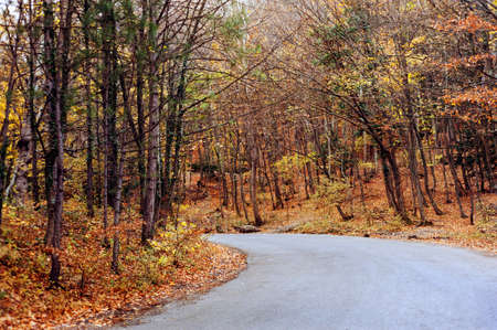 road autumnal: The road through the autumnal forest Stock Photo