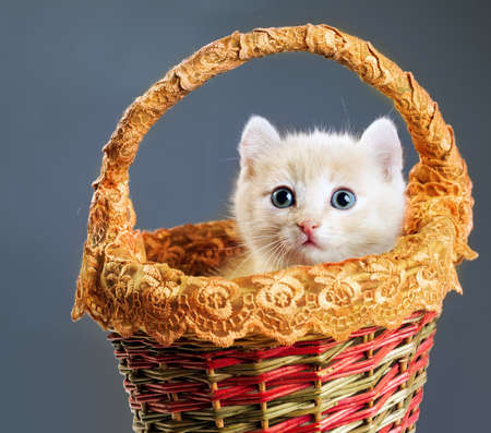 red kittens in small basket  photo