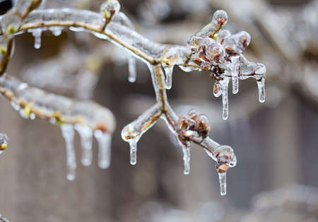 Frozen in the ice tree branches