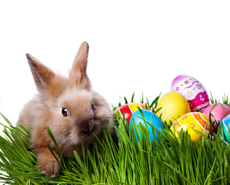 Easter bunny and Easter eggs on green grass