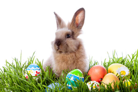 Easter bunny and Easter eggs on green grass  Banque d'images
