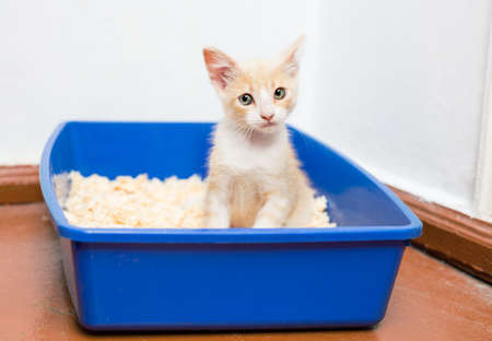 Young cat use the toilet pan filled
