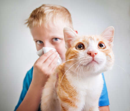 A boy with a red cat, allergy Stockfoto