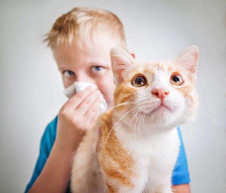 En pojke med en röd katt, allergi Stockfoto