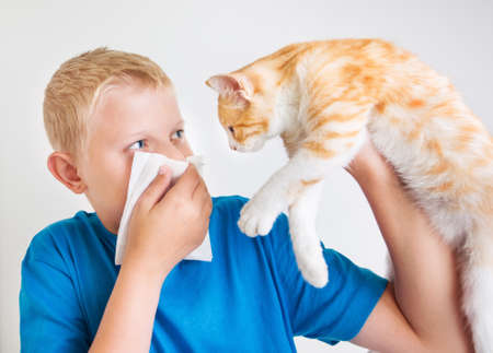 allergic reaction: A boy with a red cat, allergy Stock Photo